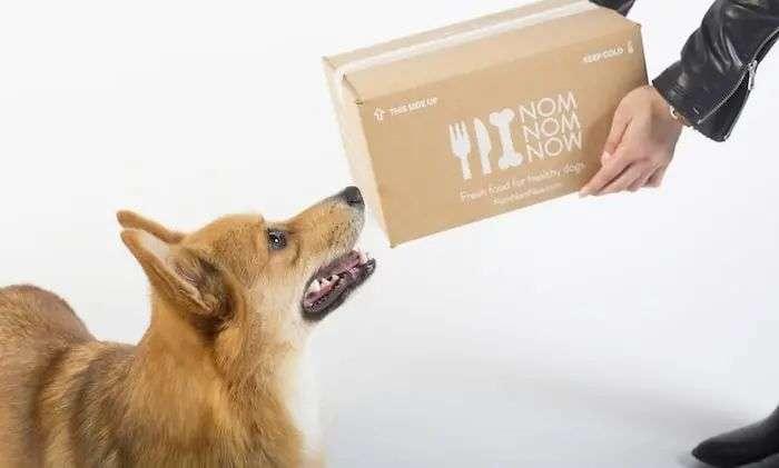 中国近亿宠物主的一千种花钱姿势
