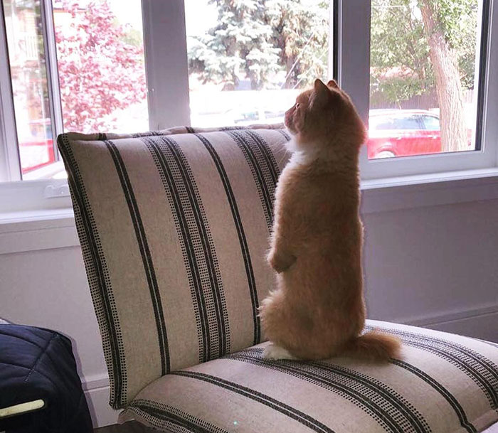 雷克斯的猫是什么梗?为什么那么多人喜欢雷克斯的猫?