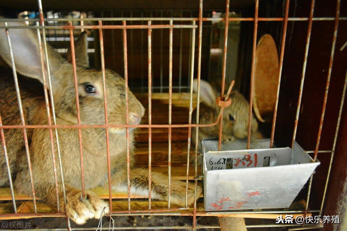 养兔子赚钱吗(兔赚钱到底有多难?)