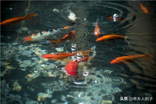 现在养什么鱼最赚钱利润大(8个暴利冷门的鱼塘养殖业)