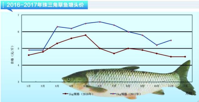 家里养什么鱼赚钱利润高(养殖这5类鱼品种最赚钱)